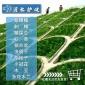 新采胡枝子种子 护坡灌木胡枝子种子价格 二色胡枝子种子批发