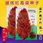 高粱种子 大田菜园高产春播易种中晚熟高抗性高粱种子 杂粮种子