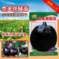 黑龙快圆茄种子批发二苠茄种子丰富维生素庭院高产蔬菜籽紫茄子