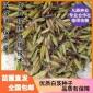 白芨种子 紫花三叉大白芨 发芽率90%以上 全国包邮 免费提供种植技术