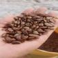 现货供应 柿子种子 树籽经过催芽处理 柿子种子 籽播培育果树种苗